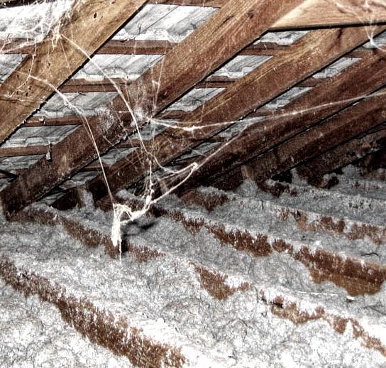 asbestos case study australia