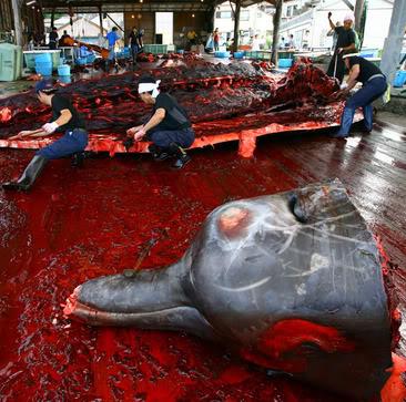 slaughter2.jpg