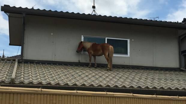 High Horse: Kurashiki, Okayama, Japan