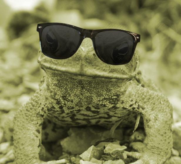 94263ef7d9b78 Daytime cane toads revealed - GreenCareer